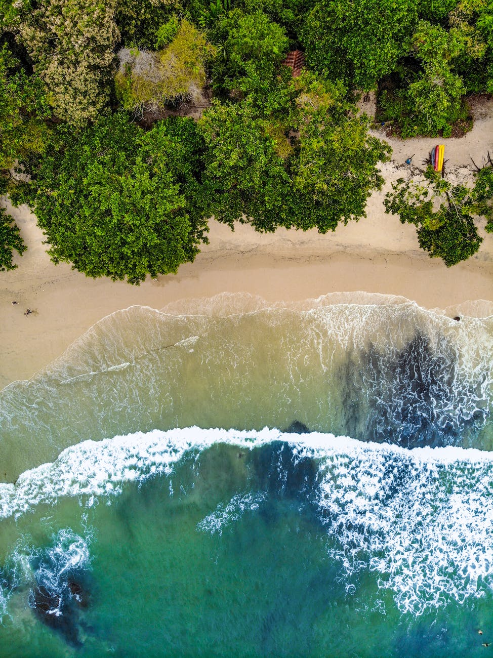 tropical coast with green forest washed by waves