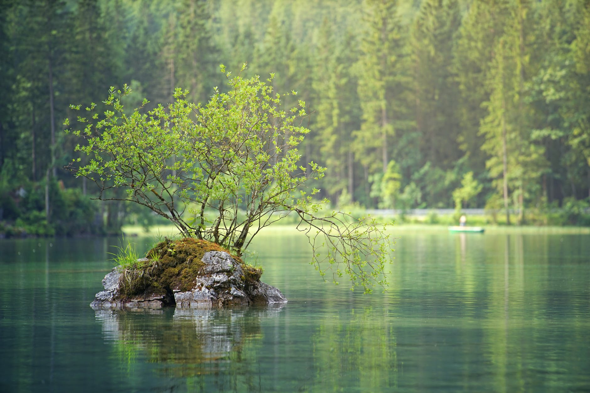 green leafed plant on body of water